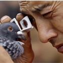 Picaturi ochi